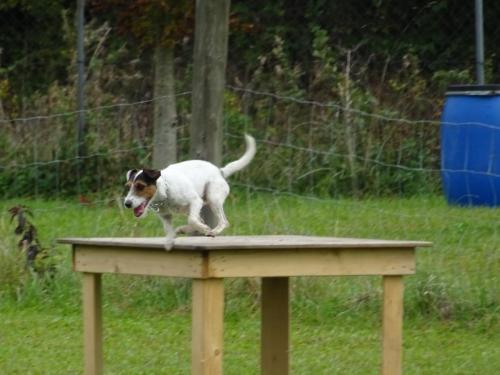 Rettungshundesport